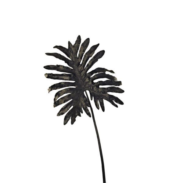 Филодендрон растение pols potten